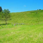 Wiesenlandschaft im Umland von Bad Tölz