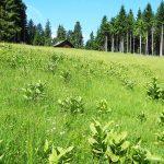 Wiesen und Wälder prägen das Umland von Bad Tölz