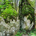 In den Wäldern rund um Bad Tölz