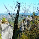 Die Sächsische Schweiz bietet eine ganz besondere Verbundenheit mit der Natur