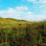 Wiesenlandschaft auf Norderney