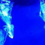 Plastikmüll im Mote Marine Laboratory & Aquarium in Sarasota (Florida)