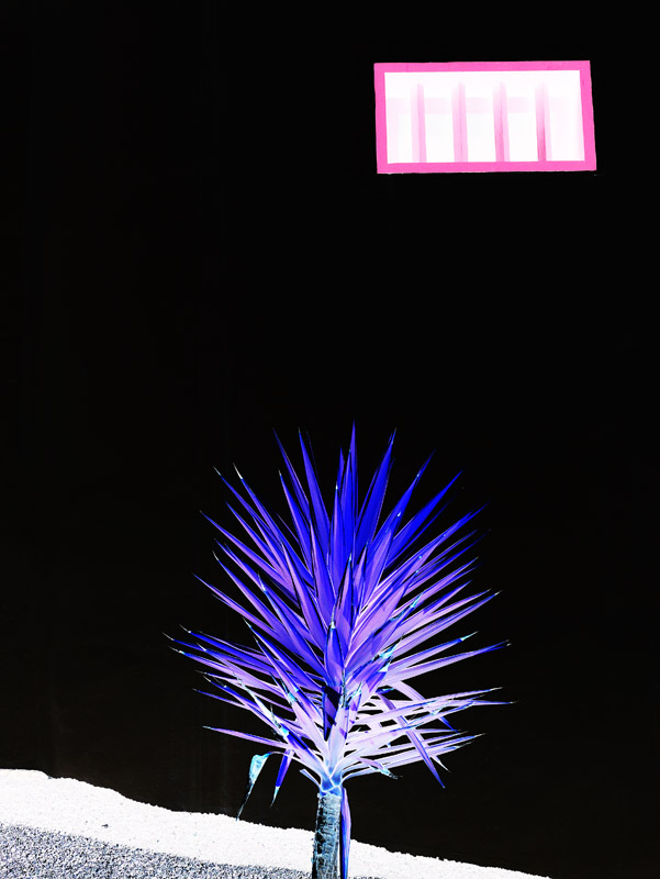 Fenster und Palme im Monumento al Campesino (Lanzarote)